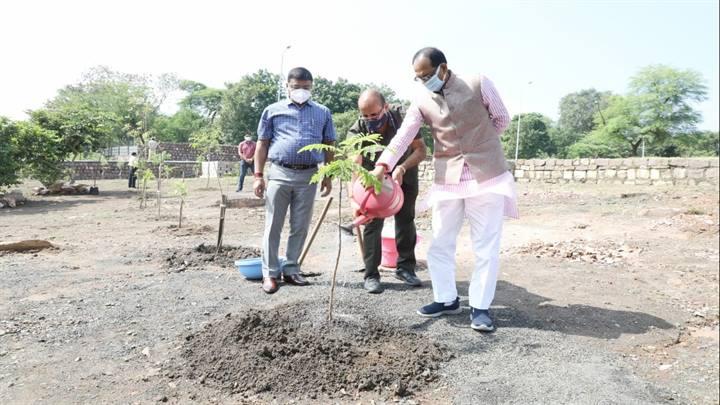 मुख्यमंत्री श्री चौहान ने गुलमोहर का पौधा लगाया