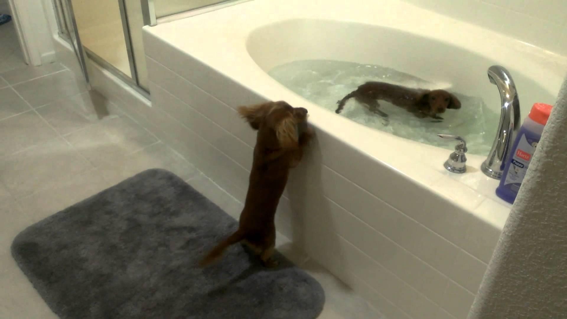 Cachorros ansiosos pela hora do banho
