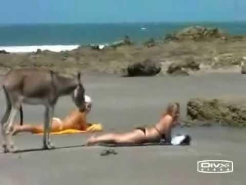 Um burro e duas mulheres numa praia