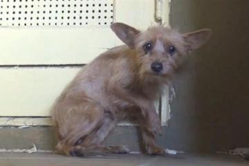 Evolução de um cão abandonado para um cão amado