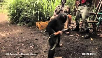 O porquê de haver guerras em África, Brutal