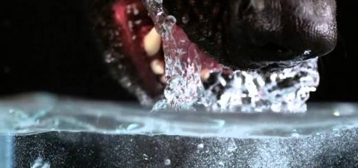 Como é que um cão bebe água