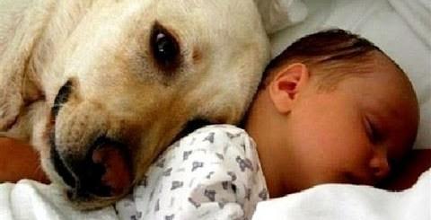 Gatos e cachorros conhecem bebés pela primeira vez