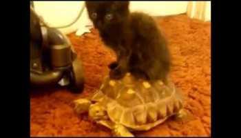 """Os gatos mais """"sacanas"""" do Mundo"""