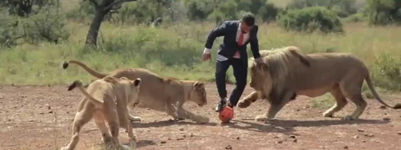 Jogar futebol com Leões