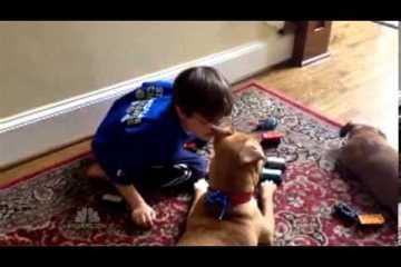 Cão sobrevive e torna-se cão do ano