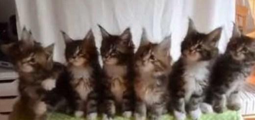 7 gatos sincronizados