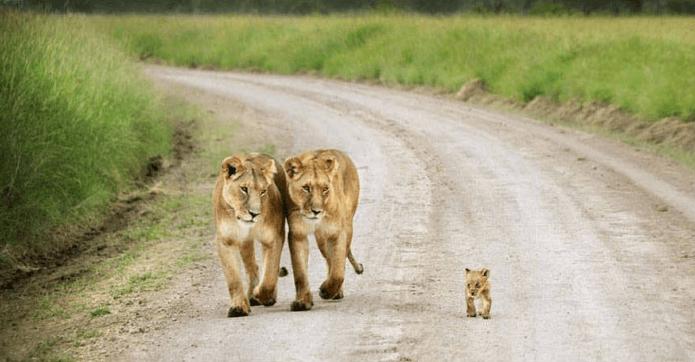 animais-e-suas-crias-maravilhoso
