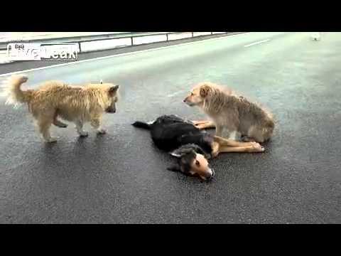 Um belo exemplo da lealdade dos cães