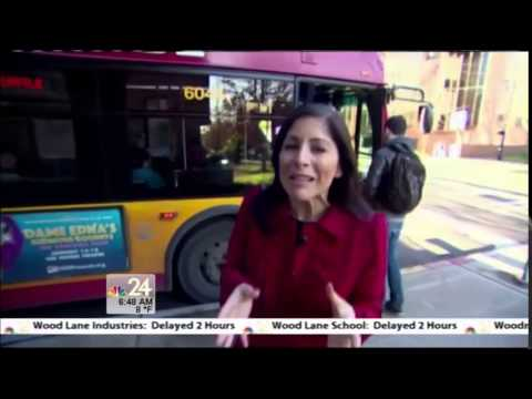 Cadela Labrador apanha o autocarro sozinha para ao parque