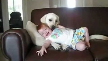 Cuidado, Não deixe os seus bebés com os cães