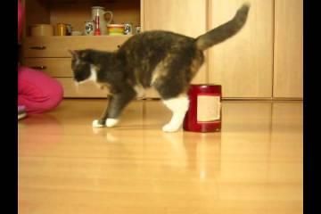 Os gatos afinal também fazem truques!