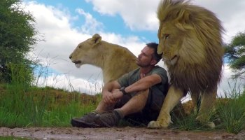 Amizade especial entre leões e tratador