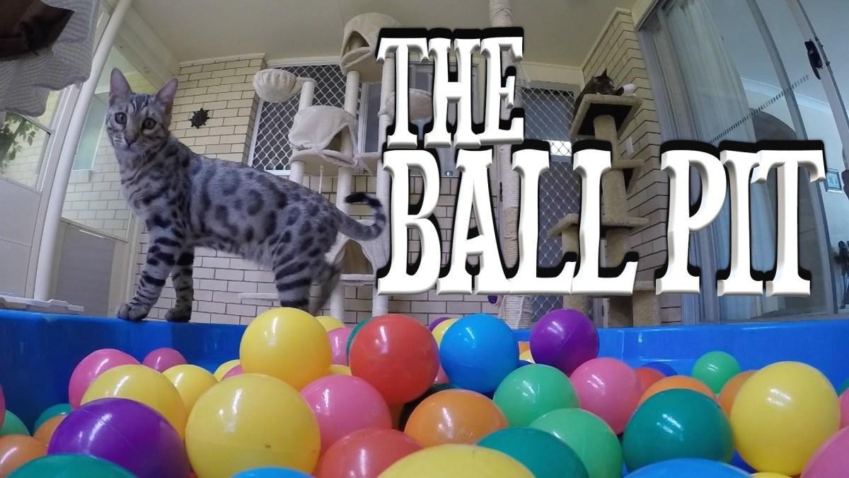 Gato em piscina de bolas, é a loucura!