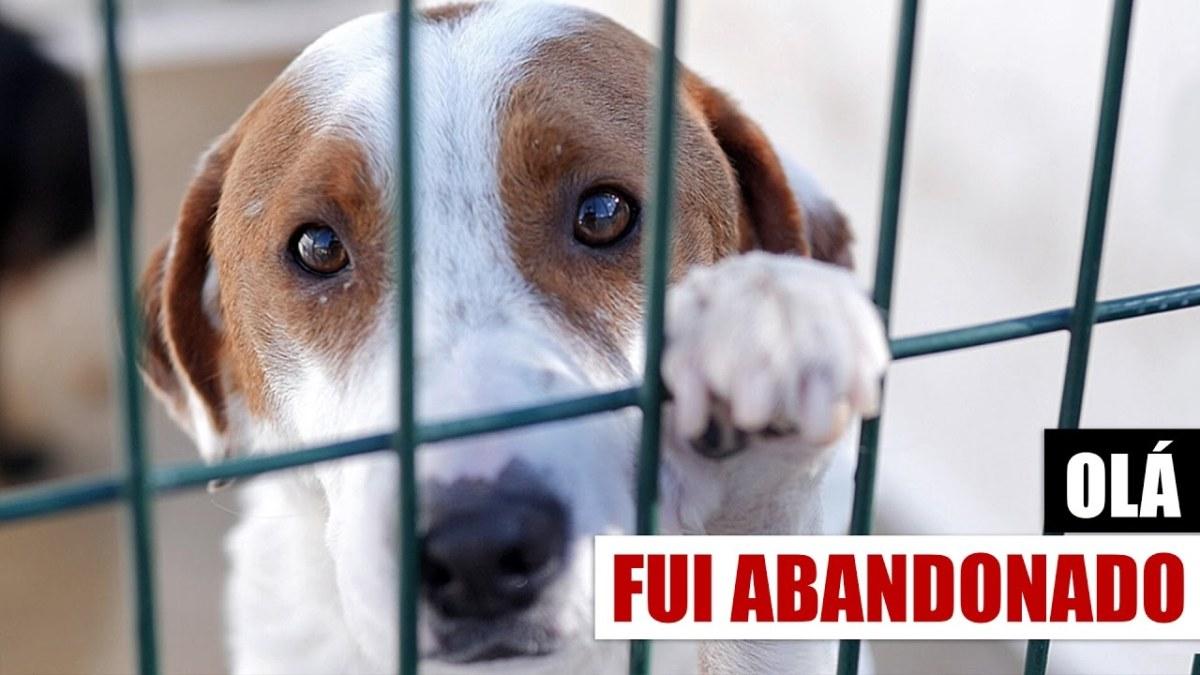 Animais de estimação, tens ou queres ter? Esta mensagem é para ti.