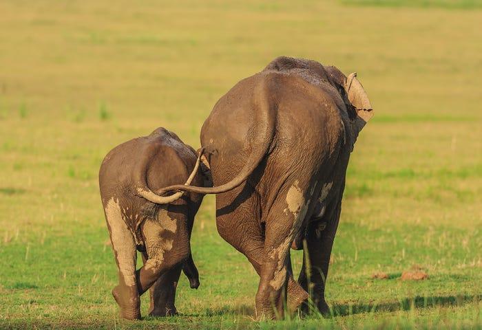 Vida selvagem em fotos hilariantes - elefantes