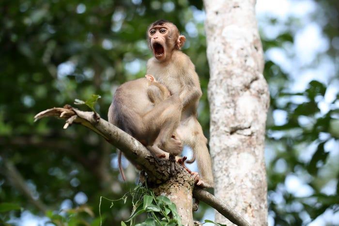 Vida selvagem em fotos hilariantes - vida de macaco