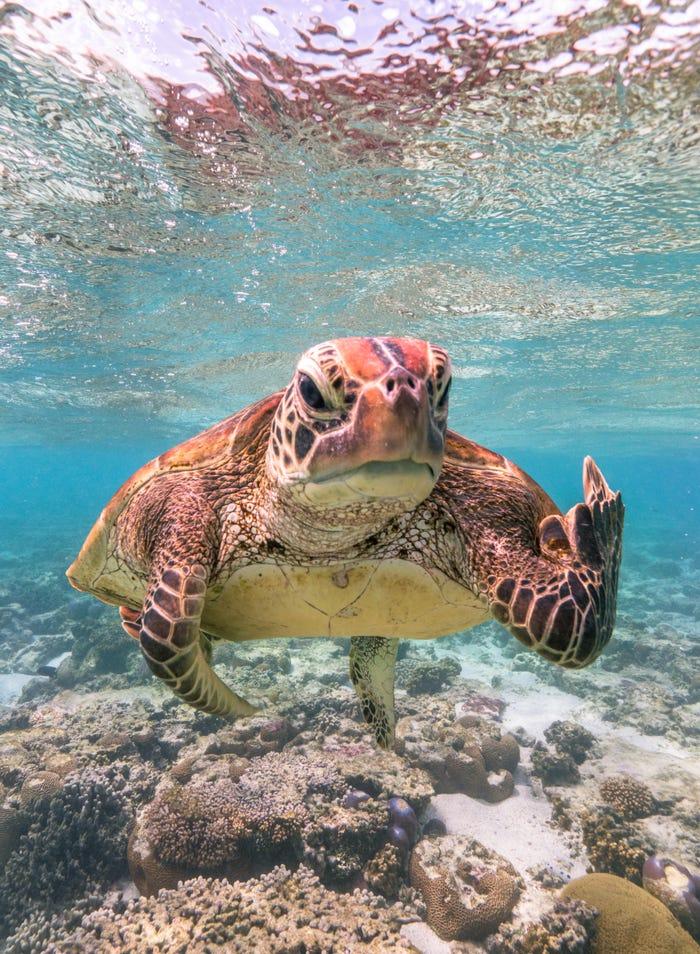 Vida selvagem em fotos hilariantes - tartaruga a fazer pirete