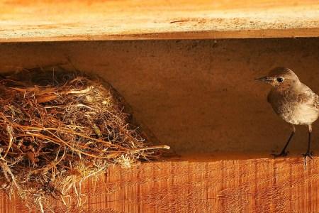 El síndrome del nido vacío y la menopausia