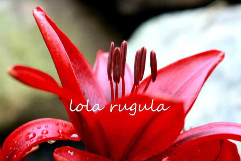 lola_rugula_lily