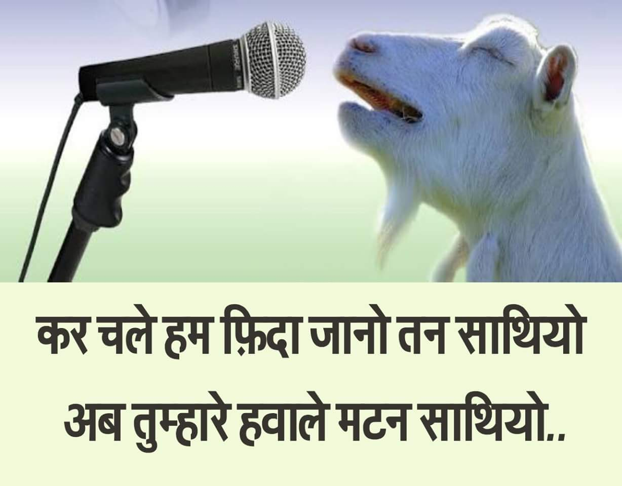 Goat Singing Its Final Song Before Eid