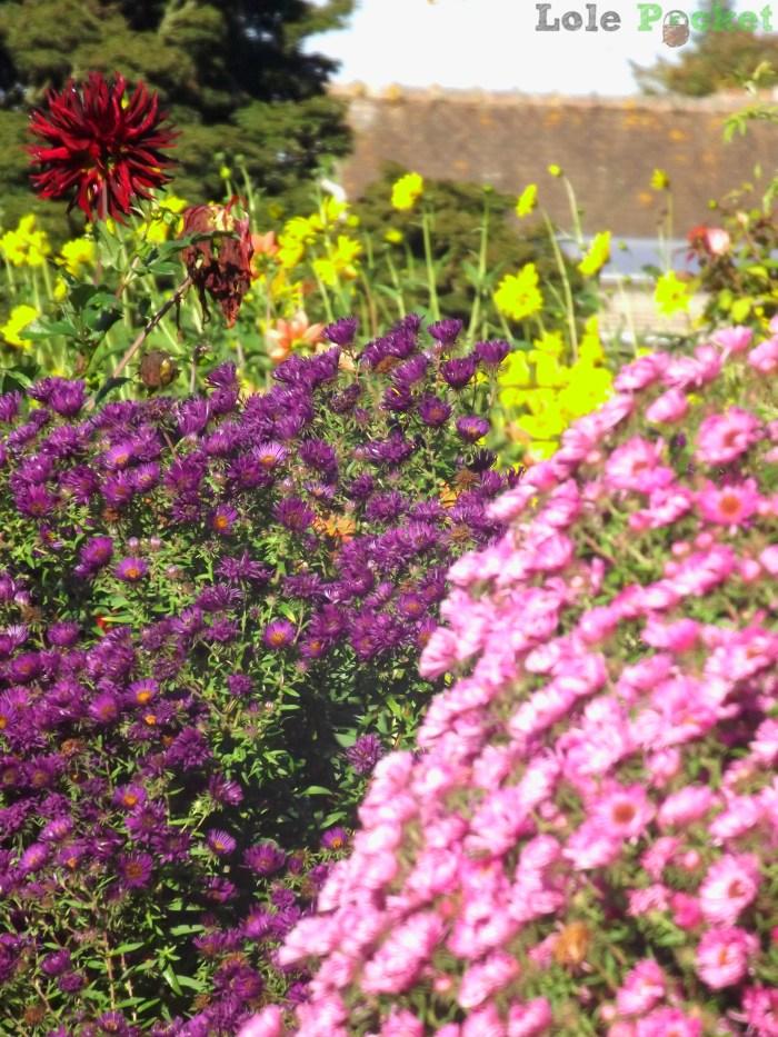 Flores do Clos Normand - Giverny