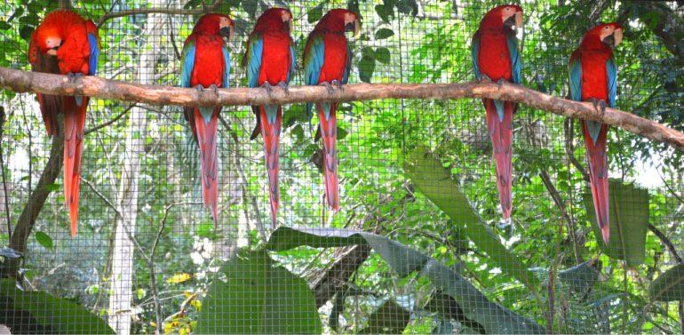 Parque das Aves - Araras