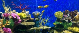 AquaRio | A novidade que chegou para ficar no Rio de Janeiro