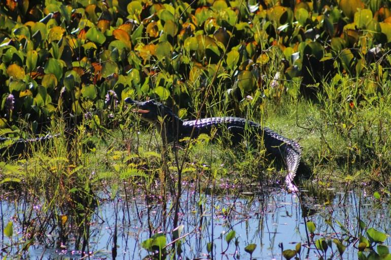 Pantanal - 11