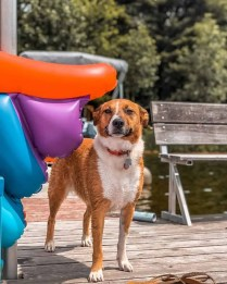 Epic Cabin Trip - Dogs, Dogs, and more Dogs