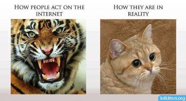 JK Im A Cat  LolKitten