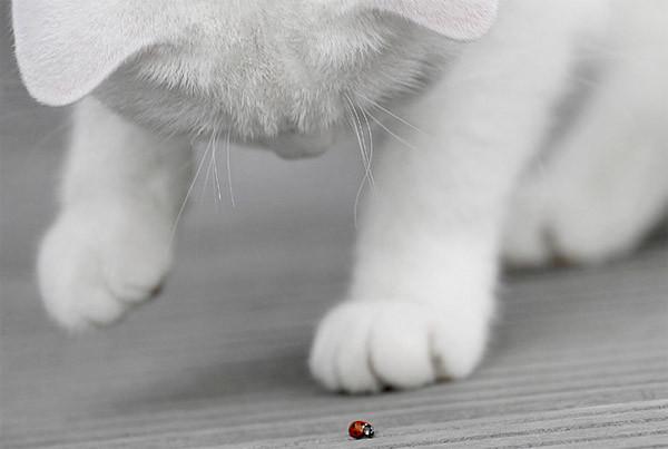 Cat & Ladybug