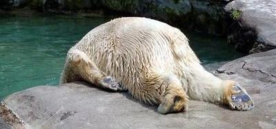 Crap, It's Monday Bear