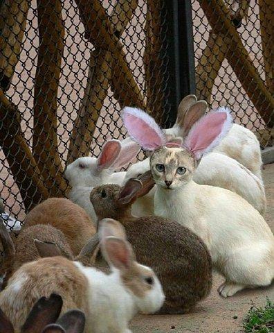 Cat In Witness Protection Program