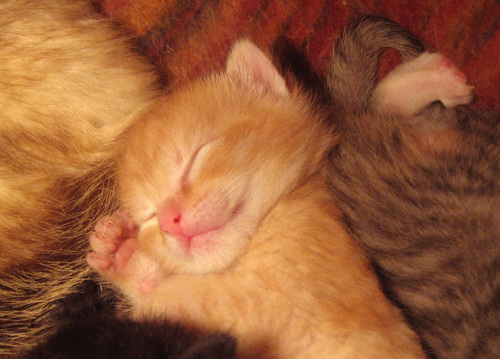 Itty Bitty Kittie