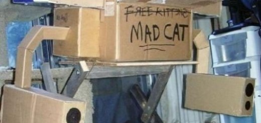 When Cats Take Over The World