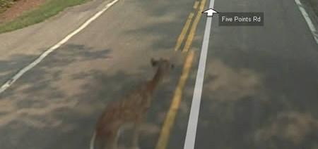 Google Killed Bambi. You Bastards!