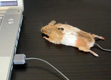 Taxidermy Computer Mouse