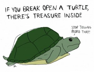 Important Safety Announcement About Turtles