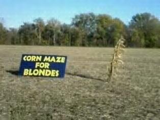 Corn Maze For Blonds