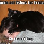 LOL Zombie Cats Get Nothing