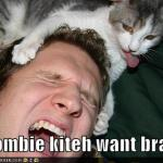 LOL Zombie Cats Eat Humans