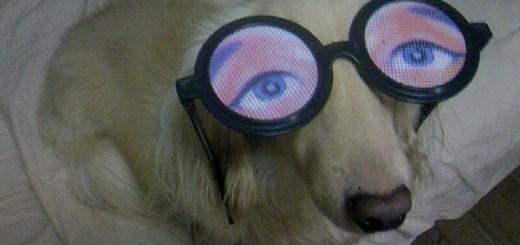 Doogie Googlie Eyes