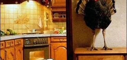 thanksgiving turkey hiding