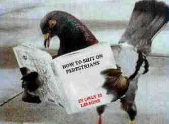 Amazon Bestseller? How To Crap On People.
