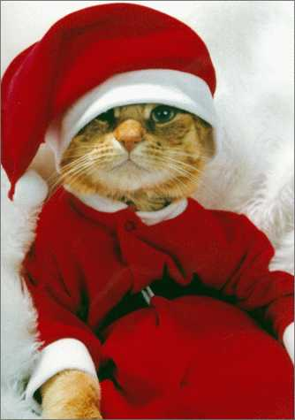 Merry Christmas. May It Be Prrrfect.