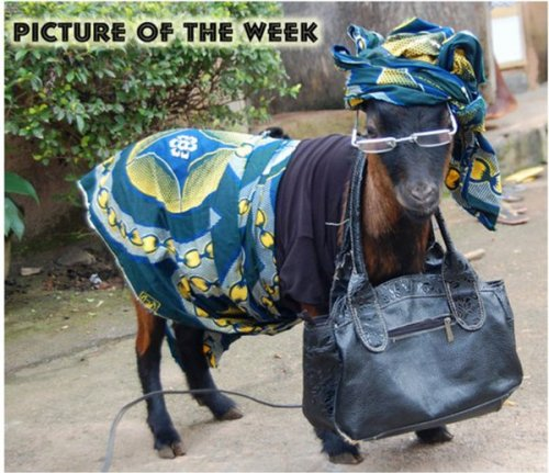 Friday Casual - Goat Style