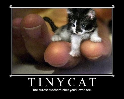 Tiny Cat - It Doesn't Get Cuter Than This
