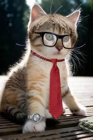 One Smart Kitty #pict