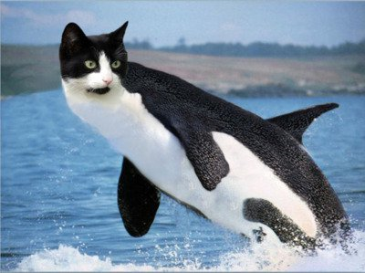 Kitty Whale Is To Cool To Exist